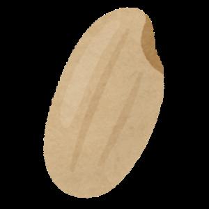 お米の構造 玄米