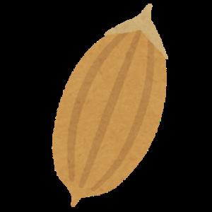 お米の構造 籾殻